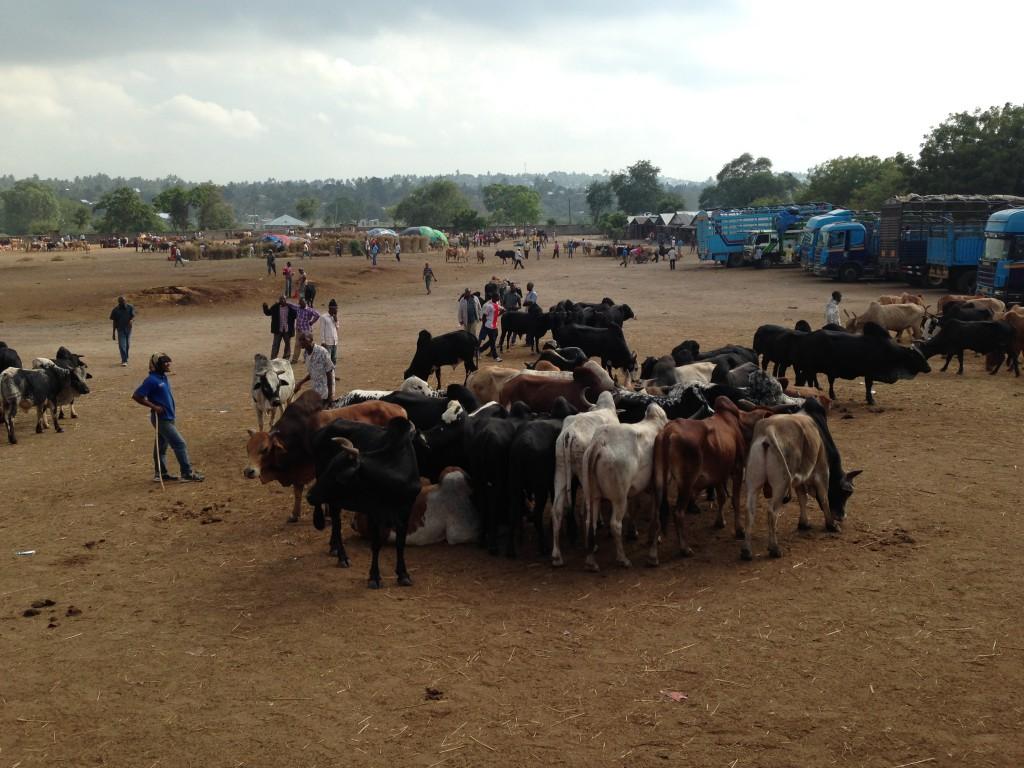 Größter Rinderhandelsplatz Ostafrikas