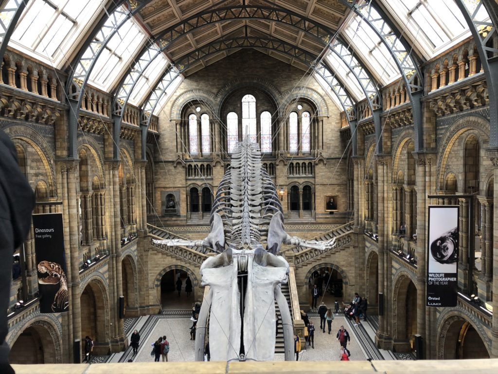 london nhm whale sceleton